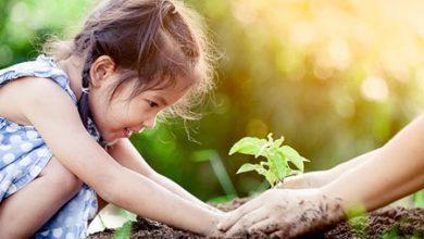 تصویر طبیعت منبع الهام و اکتشاف کودک